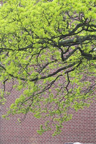 Spring Fenway  garden  05 02 08 004