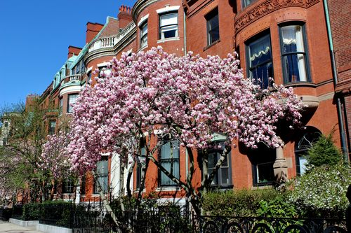 Magnolias Spring 2015 (24)