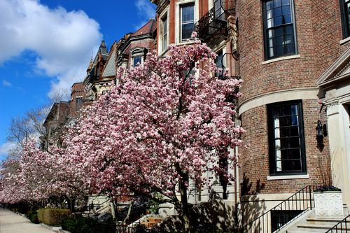 Magnolias Spring 2015 (38)